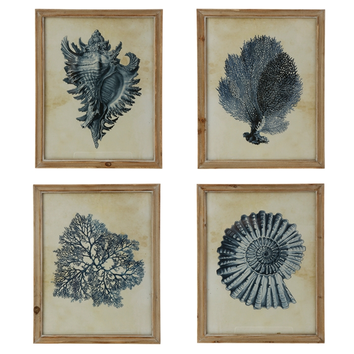 Shell Coral Wall Art