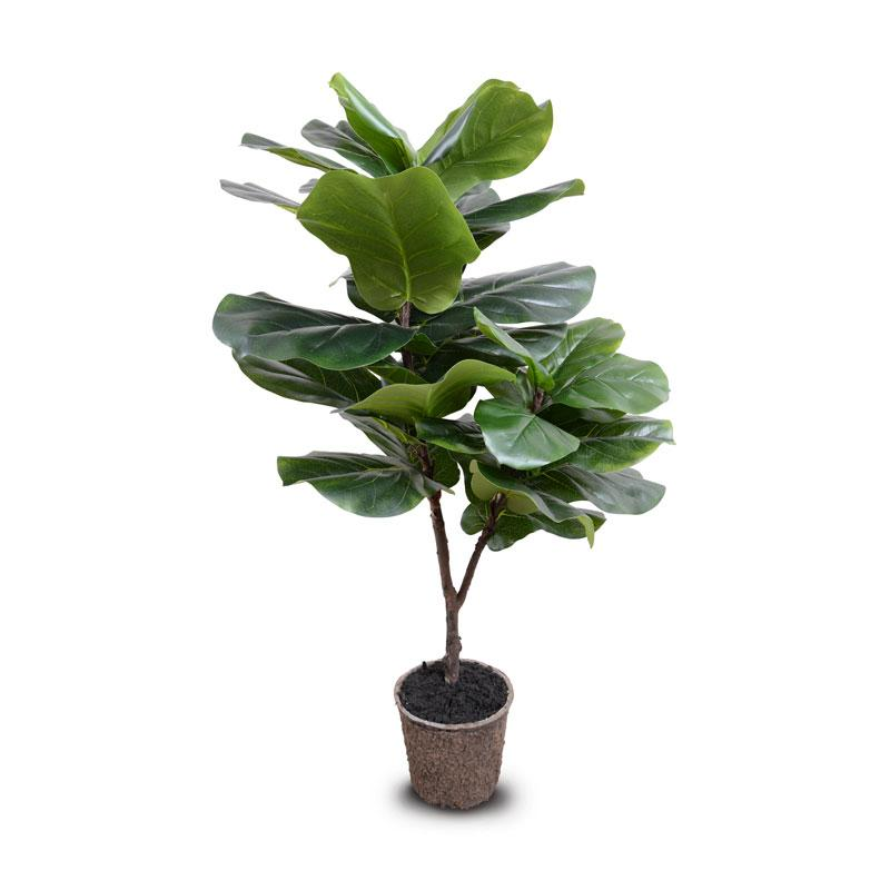 Fiddle Leaf Fig Tree 45 H Salty Home